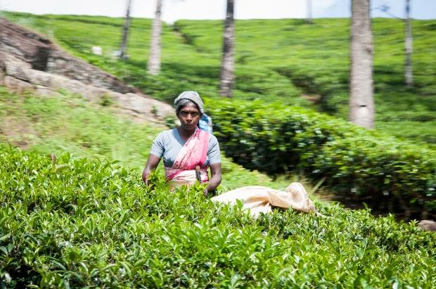 SriLanka-2014-1051