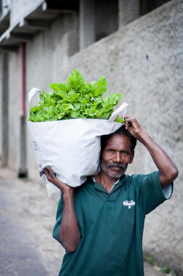 SriLanka-2014-902