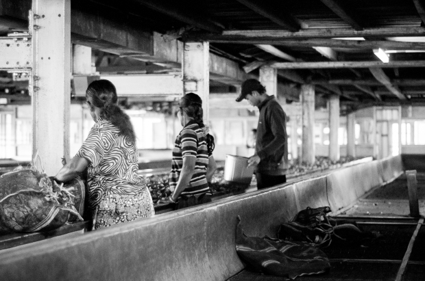 SriLanka-2014-949