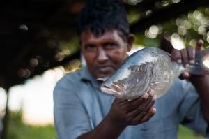 SriLanka-2014-241